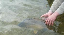 Lapozgatom a horgászlapokat - Szükség van a gyerekekre